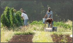Group harvesting produce